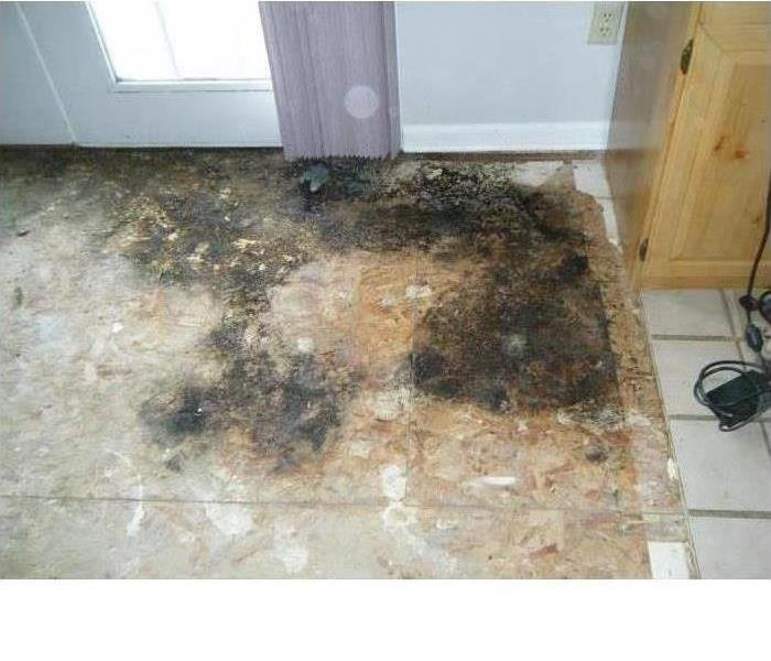 mold growth on a wood subfloor