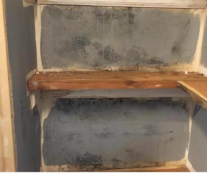 mold covered walls with shelving